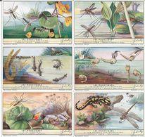 CHROMOS Liebig Série Complète N°: 1447 Les Moustiques - Liebig