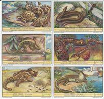CHROMOS Liebig Série Complète N°: 1482 Reptiles - Liebig