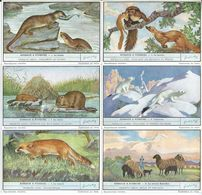 CHROMOS Liebig Série Complète N°: 1486 Animaux à Fourrure - Liebig