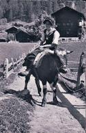 Les Haudères, Val D'Hérens, Transport à Dos De Bovin (13631) - VS Wallis
