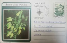 L) 1977 SOUTH AFRICA, FLOWERS, ERICA URNA VIDIRIS, NATURE, POSTCARD, GREEN, XF - South Africa (1961-...)