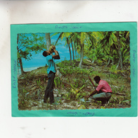 THE TROPICAL CARIBBEAN DEGUSTATION DE COCOS CARAIBES - Postcards