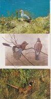 LOT DE VOLATILES - 110 CARTES - 20 € FRAIS DE PORT COMPRIS POUR LA FRANCE - Cartes Postales