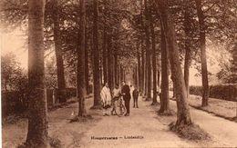 Hoogstraten - Lindendijk Met Animatie - Hoogstraten