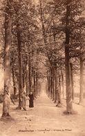 Hoogstraten - Lindendreef - Avenue Du Tilleul - Met Animatie - Hoogstraten