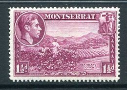 Montserrat 1938-48 KGVI Definitives - 1½d Sea Island Cotton - P.14 - HM (SG 103a) - Montserrat