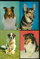 Beau Lot De 60 Cartes Postales Semi Modernes Gr. Format De Fantaisie Chiens Chien   Mooi Lot Van 60 Postk. Fantasie Hond - Postcards