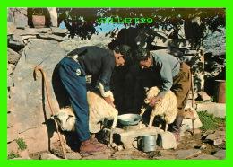 CRETE, GRÈCE - LA TRAITE À LA BERGERIE - ANIMÉE - - Grèce