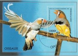 Guinea 1996 Sc. 1374 Uccelli Birds Poephila Guttata Diamante Mandarino Bengalino CTO Guinee Perf. - Guinea (1958-...)