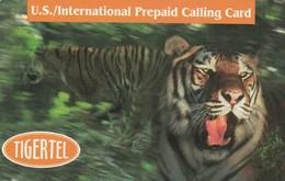United States - Tigers - United States