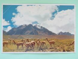 """Peru Unused Postcard """"""""Vicuñas Lake Titicaca"""""""" - Peru"""