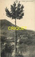 Corse, Bocognano, N° 2, éd Tomasi 212 - Francia