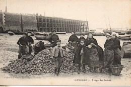 35 CANCALE  Triage Des Huîtres - Cancale