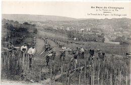 Au Pays Du Champagne - La Vigne Et Le Vin - Le Travail De La Vigne - Le Fichage (176)    (104055) - Vines