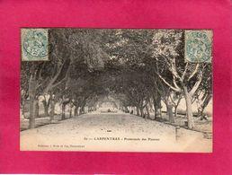 84 Vaucluse, Carpentras, Promenade Des Platanes, 1904, (J. Brun) - Carpentras