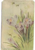 Tematica- Fiori - Flower, Fleur, Fiore - Not Used - Flores