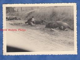 Photo Ancienne D'un Soldat Allemand - FRANCE - Aprés Les Combats - WW2 Mai Juin 1940 German Soldier Cheval Mort Death - Guerre, Militaire