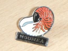 Escargot Nautile Nouméa - Animali