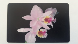 Flower Orchid, Venezuela - Venezuela