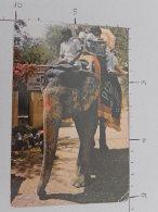 Elephent - India - Non Viaggiata  - (3492) - India