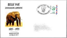BELLE VUE Zoological Gardens. Elefante - Elephant. Manchester 2011 - Elefantes