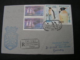 Chile Cv. Pinguine Cv.  1992 - Pinguine