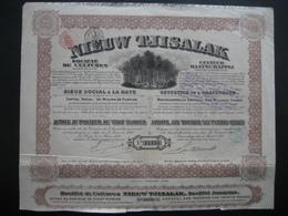 Action De 1910 LA HAYE - NIEUW TJISALAK Société De Cultures - Actions & Titres