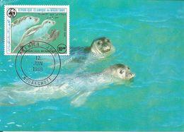 1986  - NOUAKCHOTT  -   Monk Seal - Moine Otarie - Mauritania