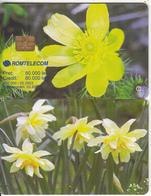 ROMANIA - Flower, 02/03, Sample(no CN) - Romania