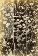 France Photographie Albumine Etoffes Anciennes Par Armand Guerinet Vers 1880 #9 - Photographs