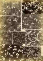 France Photographie Albumine Etoffes Anciennes Par Armand Guerinet Vers 1880 #5 - Photographs