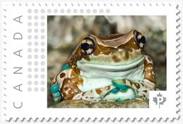 AMAZON MILK FROG, Custom Postage Stamp MNH Canada 2018 [p18-04sn19] - Frogs
