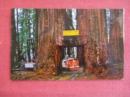 Miniature Train Twin Drive Thru California Redwoods-------ref 2911 - Trains