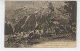 Cols De SAINT DALMAS VALDEBLORE - Troupeau De Vaches Au Pâturage - Autres Communes