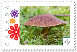 Brown MUSHROOM, Custom Postage Stamp MNH Canada 2018 [p18-04sn18] - Mushrooms