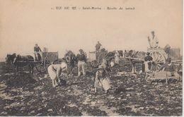 CPA Saint-Martin(-de-Ré) - Récolte Du Varech (avec Très Belle Animation) - Ile De Ré