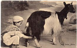 Chèvre  - Milk Seller - MALTA - Traite De Chèvre      (104185) - Altri