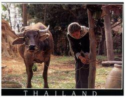 (175) Thai Village Cow - Animales