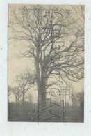 Champvans (39) : Le Chêne De La Bique En 1916 (animé) PF. - Autres Communes