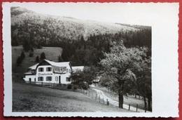 1950 POST PUCHBERG Schneeberg PENSION L. GSCHEIDER, LOSENHELM / AUSTRIA - Neunkirchen
