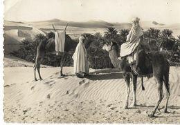 SAHARA - En Vue De La Palmeraie - Western Sahara