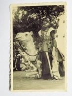C.P.A. NIGER : Partisan Méhariste - Niger