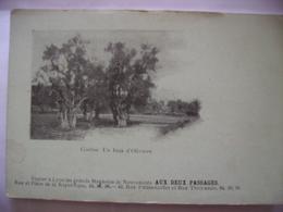 Corfou Un Bois D'olivier  Precurseur - Grèce