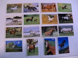 Horses Chevales Cavalos Complete Set 16 Portugal Portuguese Pocket Calendars 1993 - Calendars