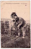 0920 - Vendange En Champagne - Une Bonne Farce - E.L.D. - N°24 - - Champagne-Ardenne