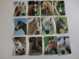 Horses Chevales Cavalos Complete Set 12 Portugal Portuguese Pocket Calendars 1991 - Calendars