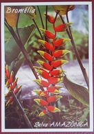 BROMELIA - Selva Amazonica - Amazonas - Fiori