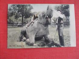 Elephant Cincinnati  Zoo  -- Ref 2914 - Éléphants