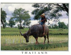 (275) Thailand - Buffalos & Rice Farming - Stieren