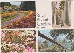 ASIE,ASIA,SRI LANKA,ceylon,clockwise From Left,colourful Pathway,palm Fringed ,avenue Suspension,bridge Orchids,rare - Sri Lanka (Ceylon)